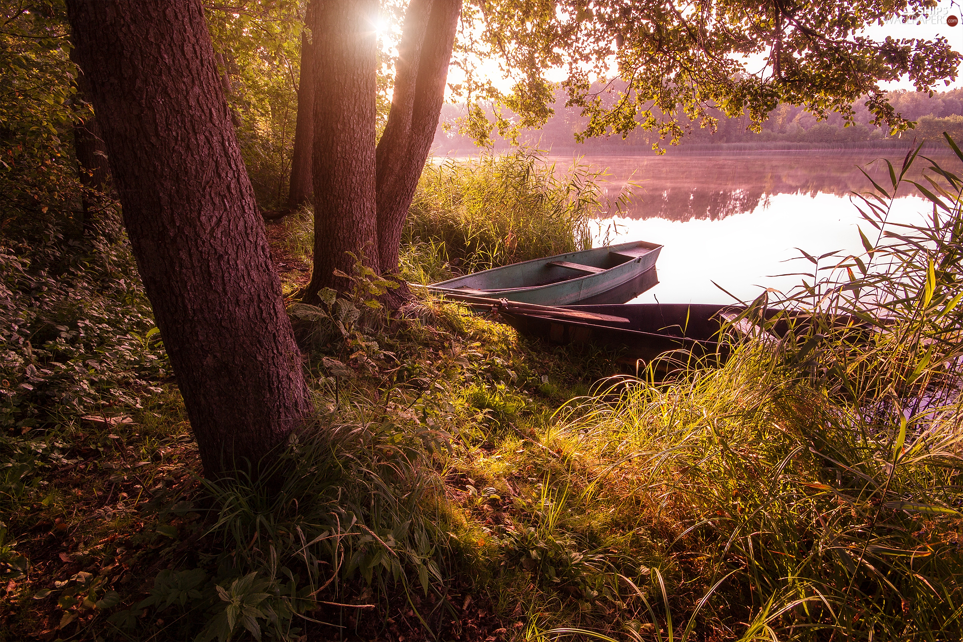 trees, boats, Plants, coast, lake, viewes, grass