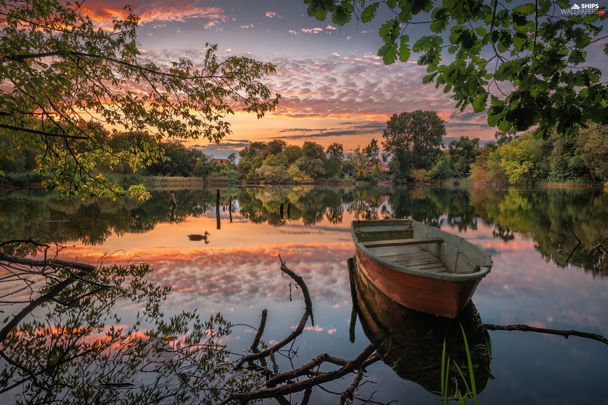duck, trees, reflection, viewes, clouds, Boat, lake, Great Sunsets