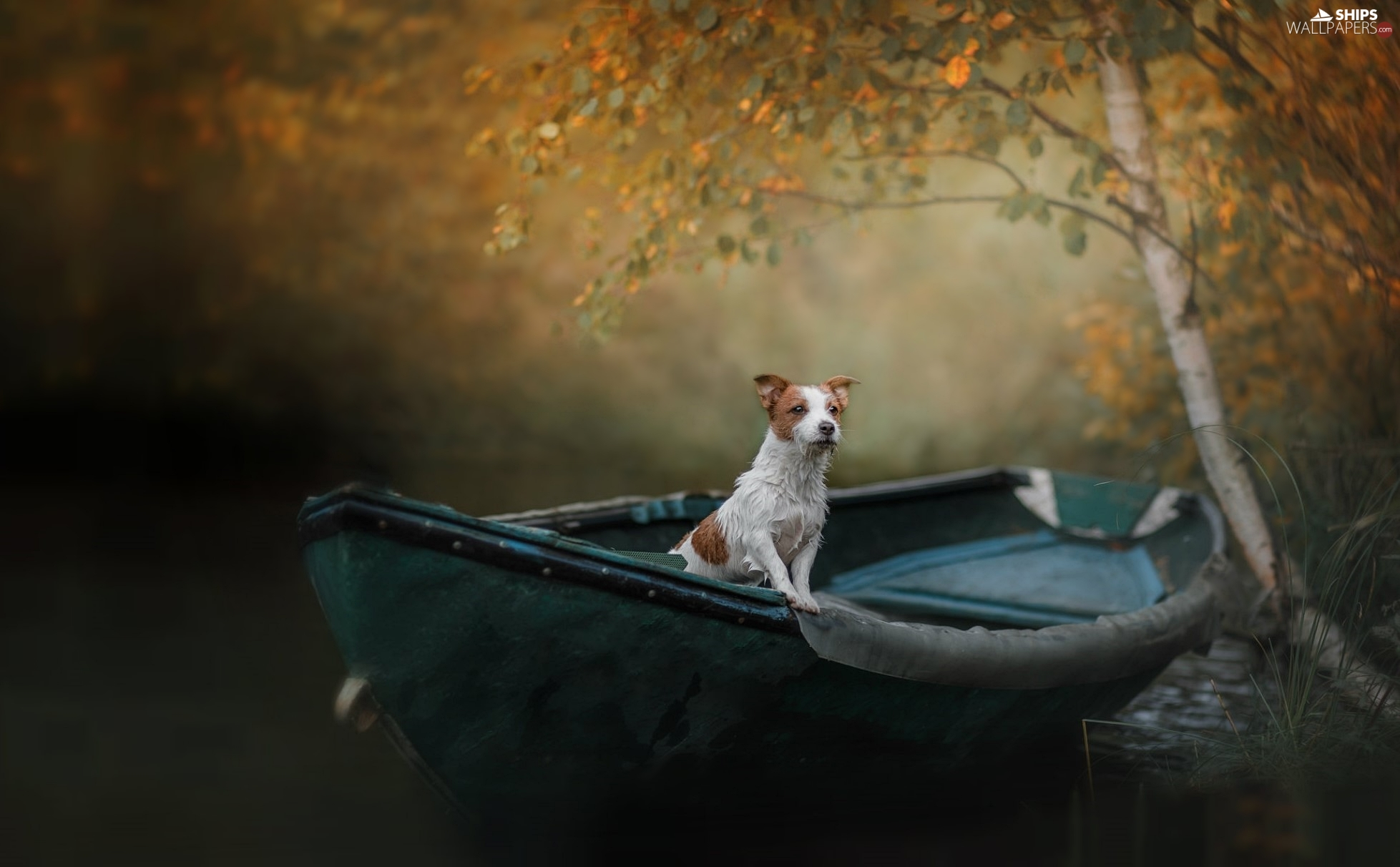 dog, Boat, birch-tree, Jack Russell Terrier