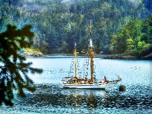 Gulf, trees, viewes, sailing vessel