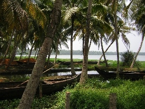 boats, grass, water, Palms
